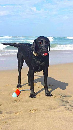 Salty! Yoko at Dog Beach Nature On Your Doorstep 🐾 California