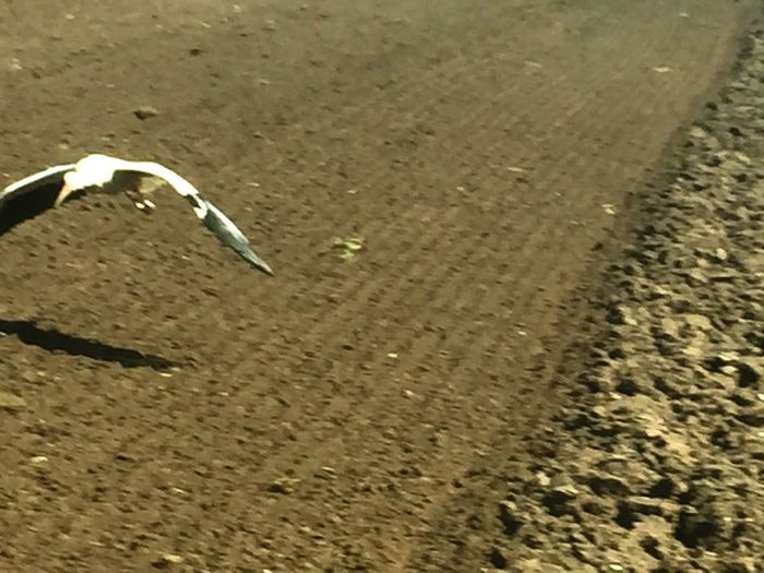 Storck After Takeoff Storch Kurz Nach Abheben Flying Spread Wings Outdoors Nature Animal Themes Animals In The Wild One Animal Animal Photography