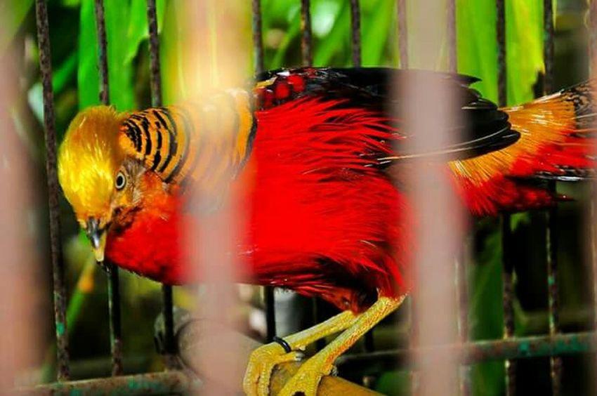 Travel Destinations Ilocos Sur, Philippines Baluarte, IlocosSur, Philippines