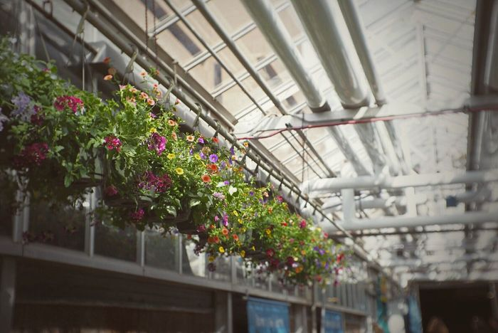 Flowers Greenhouse Hanging Spring Horticulture Indoors