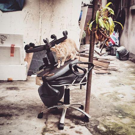喵? 我出門啦. Cat Canton Guangzhou