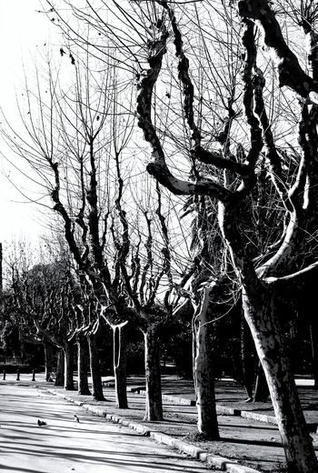 Trees in Barcelona First Eyeem Photo Tree Avenue Path Park Nature