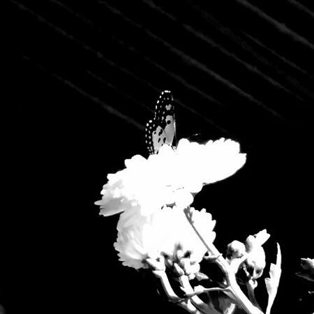 Black Background No People Close-up Indoors  Day EyeEm Selects EyeEmNewHerе EyeEm Best Shots House Plant Travel Buterfly 🌺🌺🌺 Balck And White Photography Black And White Collection  Love ♥ Nature Technology Full Length Animal Themes