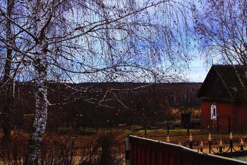Природа Россия ноябрь осень деревня 2015  Nature Russia Nowember Autumn Village