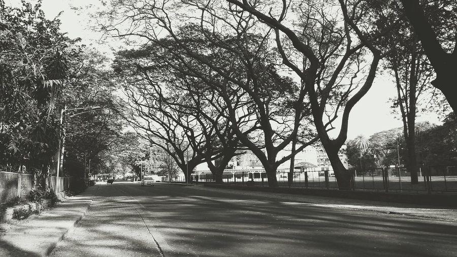 Tree Road Bare