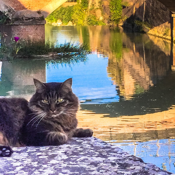 Domestic Pets Animal Themes Mammal Domestic Animals Animal Feline Cat Vertebrate Domestic Cat Water One Animal Reflection Relaxation Portrait No People Looking At Camera Nature Sitting Whisker
