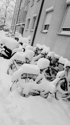 no biking today Bicycle Bike Snow City Architecture Building Exterior Built Structure Snow Covered Window Box Snowfall Icicle Cold Temperature Winter Cold Frozen Weather Condition Covering Deep Snow
