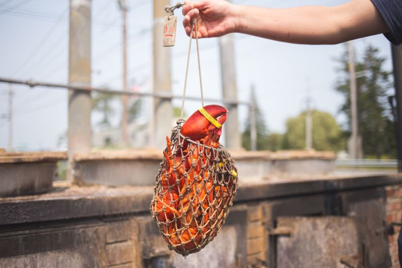 Close-up of man holding lobster in fishing net