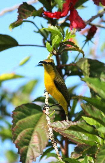 Bird Birds Bird