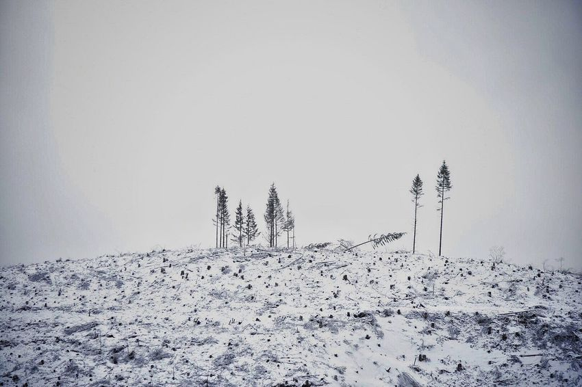 Cold Temperature Snow Winter Tranquil Scene Tree Nature No People Beauty In Nature Day Outdoors Tranquility Scenics Landscape Sky Snowing Logging Trees Snow Covered Hillside Mountain Outdoor Photography Wintertime Snow ❄ Outside Photography Scenery Shots