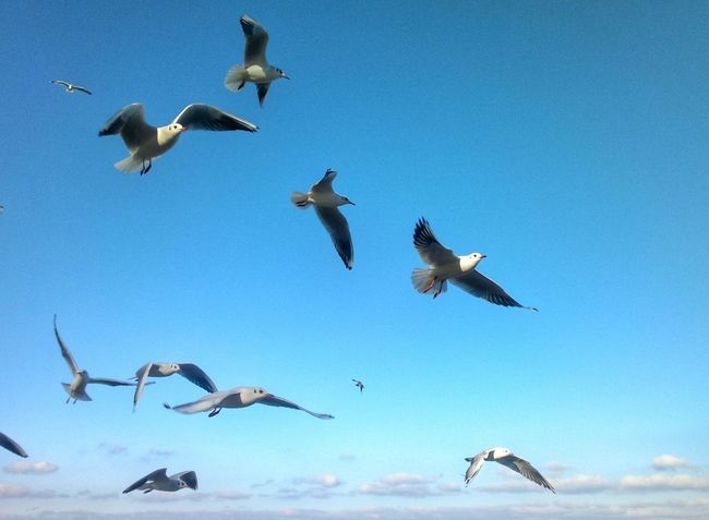 Martılar Gezgin Hayatakarken Objektifimden Birkarehayat Denizhavası Birds Sun Sea And Sky Freedom Hayatandanibarettir Yaşamdankareler