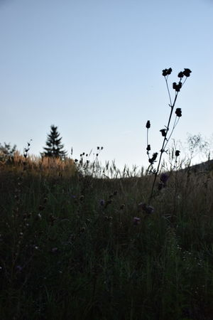Hiking Beauty In Nature Clear Sky Field Flowering Plant Grass Growth Hike Land Landscape Nature No People Outdoors Plant Shadow Sky Thistle Thistle Flower Tranquil Scene Tranquility