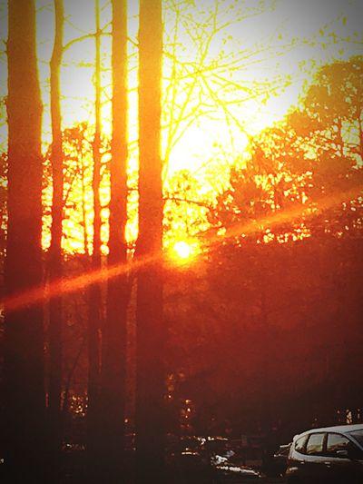 Car Tree Sun No People Sunlight Sunset Nature