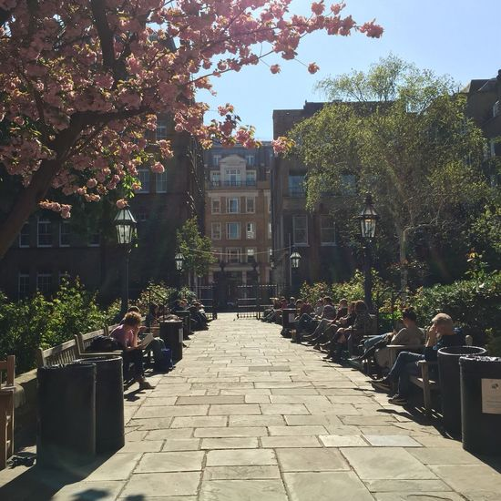 Park scene - London Covent Garden - St. Paul's Church Found On The Roll London Noedit Nofilter Park Covent Garden  Artists Actors Church Sunlight Pathway Outdoors The Great Outdoors - 2016 EyeEm Awards City Life Bench Relaxing Tree Plant Footpath Narrow Sky Blossom London Lifestyle EyeEm LOST IN London