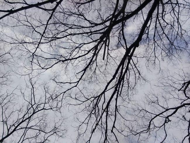 。 Gray