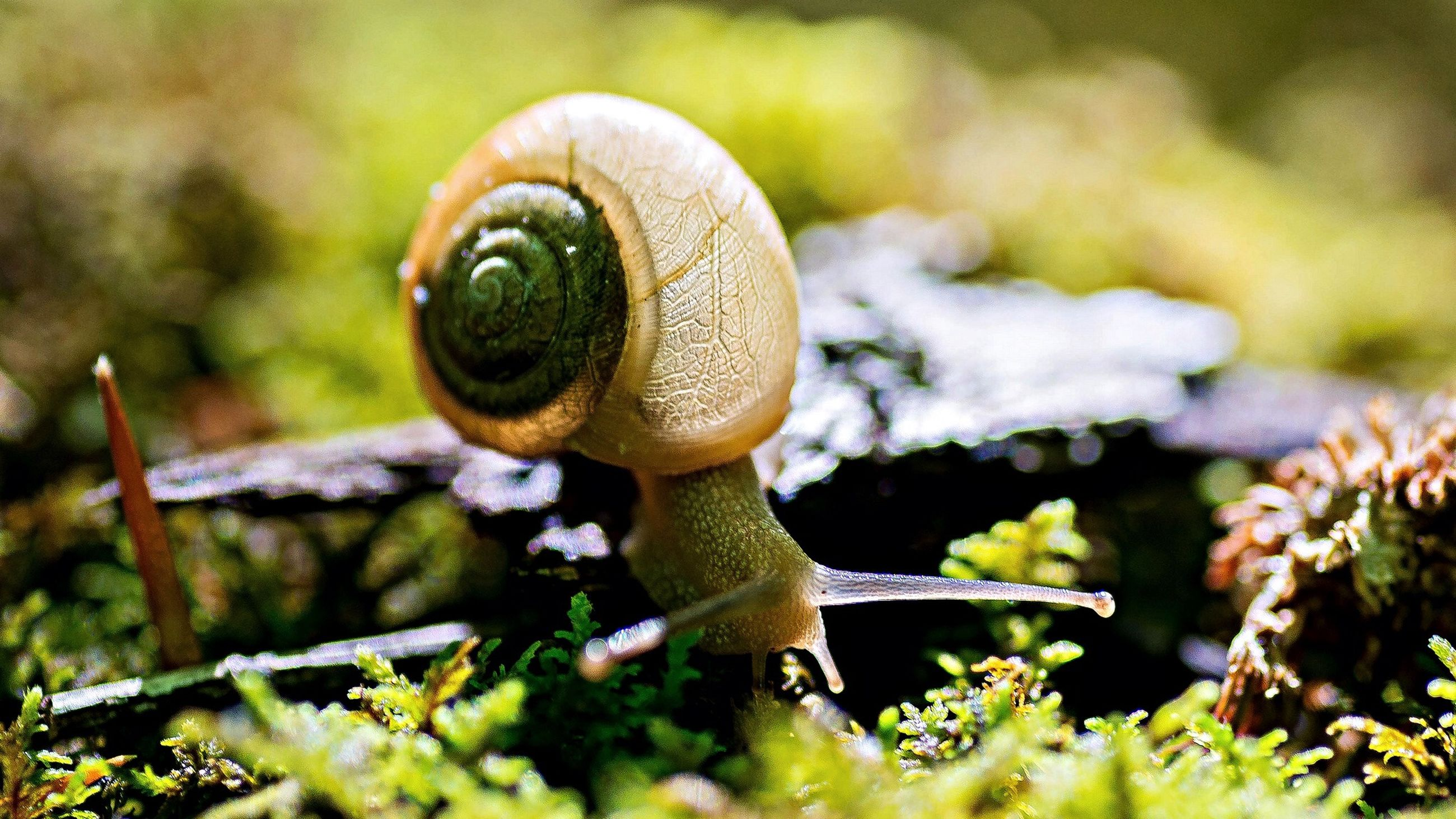 close-up, focus on foreground, selective focus, snail, nature, forest, growth, leaf, one animal, moss, animal themes, day, animal shell, outdoors, plant, wildlife, tree, beauty in nature, no people, green color