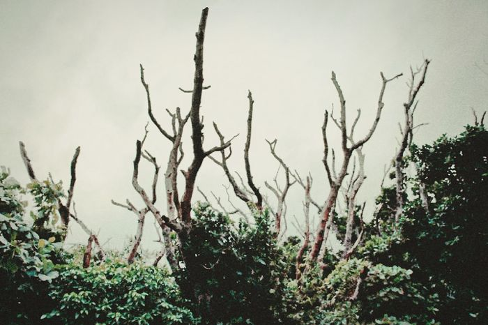 Plant Nature Landscape Tree Outdoors No People Day Growth Branch Beauty In Nature Sky Miyako Okinawa 沖縄 宮古島 伊良部島 Irabu Dead Tree Dead Plant Green Plant Landscape Green Color Landscapephotography Landscape Dreamscapes