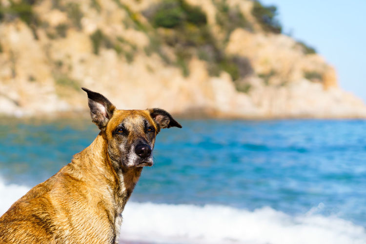 Dogs Looking At Camera Animal Animal Themes Animals Beach Beauty In Nature Canine Day Dog Dogslife Domestic Animals Mammal Nature No People One Animal Outdoors Pet Pets Portrait Scenics Sea Sky Summer Pet Portraits Been There. Done That. Summer Exploratorium