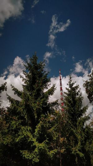 Transmitter Tower Transmitter Blue Sky Blue Sky White Clouds Blue Sky And Clouds Blue Tree Trees Trees And Sky Nature Little Nature Green