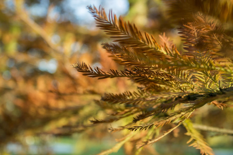 Autumn Autumn Colors Beauty In Nature Close-up Day Fall Growth Nature Outdoors Park Plant