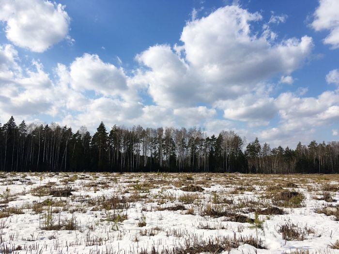 Birch Coniferous Tree Cloud - Sky Sky Plant Tree Snow Nature Tranquility Day Land Field No People Environment White Color Beauty In Nature Scenics - Nature My Best Photo