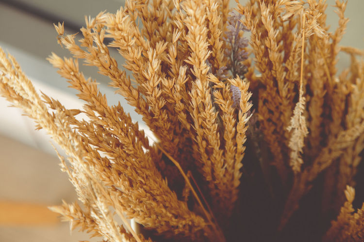 Close-up of stalks in wheat
