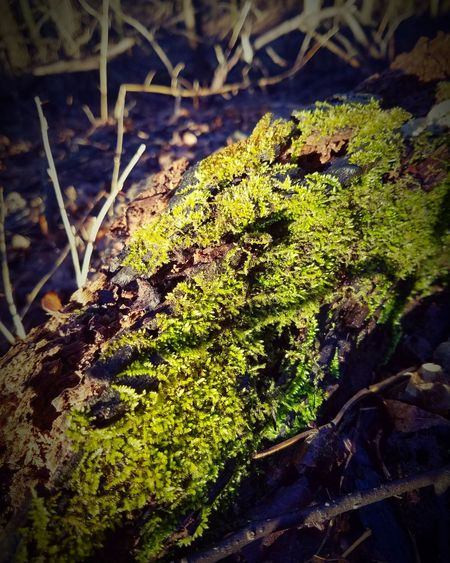 There is beauty in the pathless woods. The Minnesota Trails Nature Green Color Close-up Moss sunlight Hello Friends Earth_Collections Optoutside Rural Scene Focus On Foreground Winter Beautyineverything Country Solitude Tranquil Scene Landscape Myview Parksandrec
