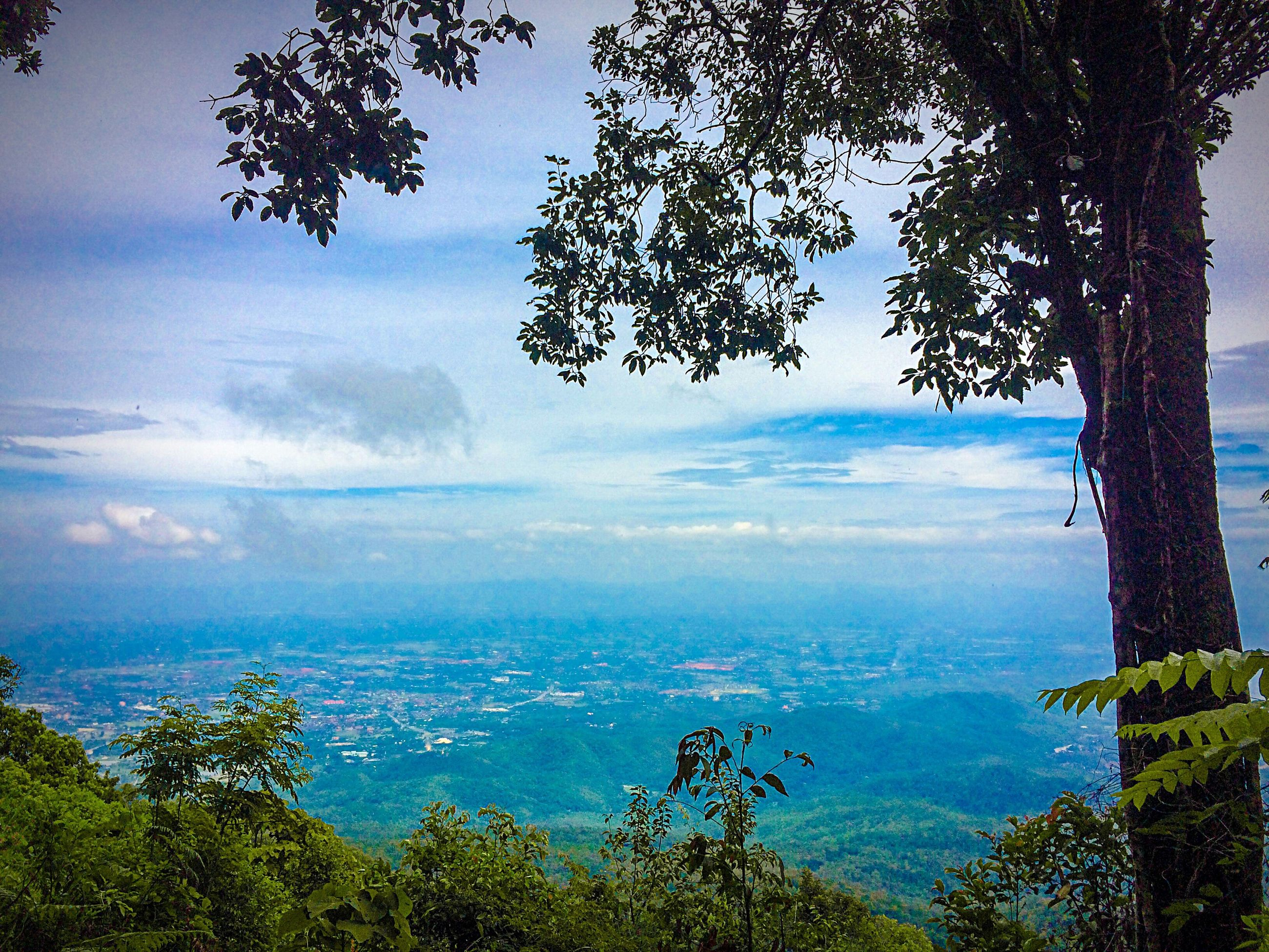tree, scenics, sky, tranquil scene, tranquility, beauty in nature, mountain, cloud - sky, nature, landscape, weather, idyllic, cloud, mountain range, cloudy, no people, growth, day, outdoors, blue, non-urban scene, travel destinations, majestic, green color, hill, remote, cityscape, tourism, non urban scene