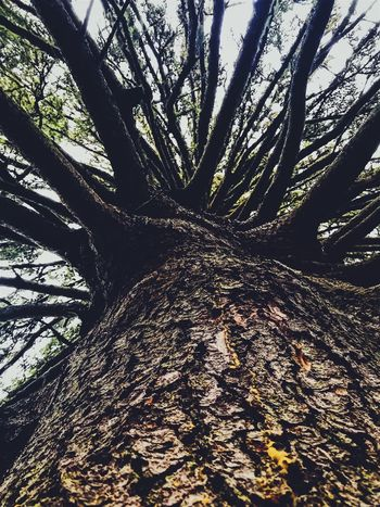 Treesome Tree Tree Trunk Nature Forest Day Tranquility Beauty In Nature Outdoors Scenics WoodLand Growth Branch Sky