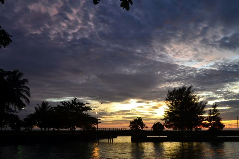 Tree Sunset Reflection Cloud - Sky Outdoors Sky Beauty In Nature Palm Tree Nature Tranquility Scenics Sunsets Viewscape Horizon Over Water