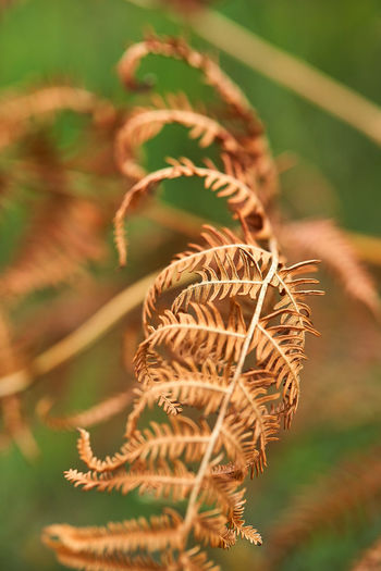 Close-up of wilted plant on field