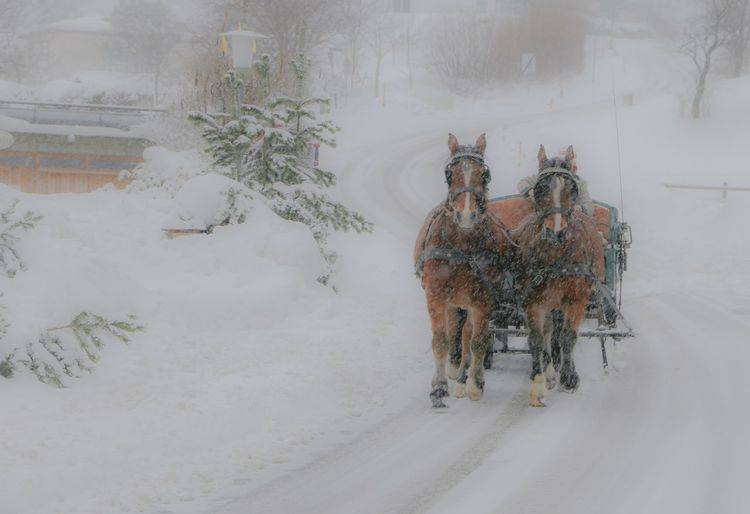 Horse cart on road during winter