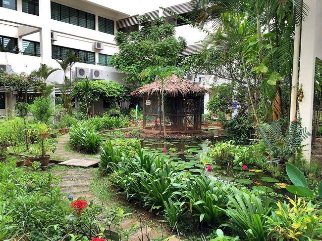 Nature On Your Doorstep Ecology Eco Park Singapore