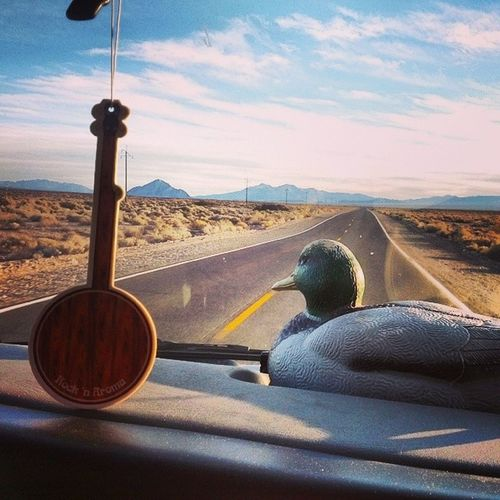 Moses the Mallard watch's the road for new adventures Mosesthemallard Blue5 Americorpsnccc Adventures deathvalley