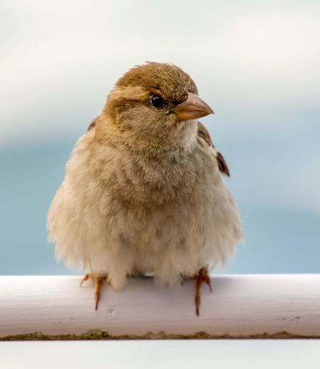 Close-up of bird perching on railing against sky