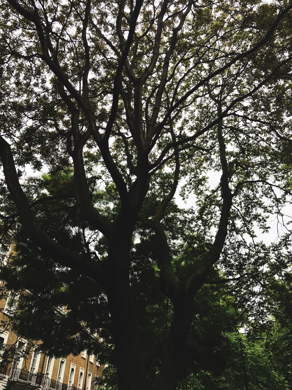 tree, day, low angle view, branch, outdoors, nature, growth, tree trunk, sunlight, no people, tranquility, forest, beauty in nature, sky