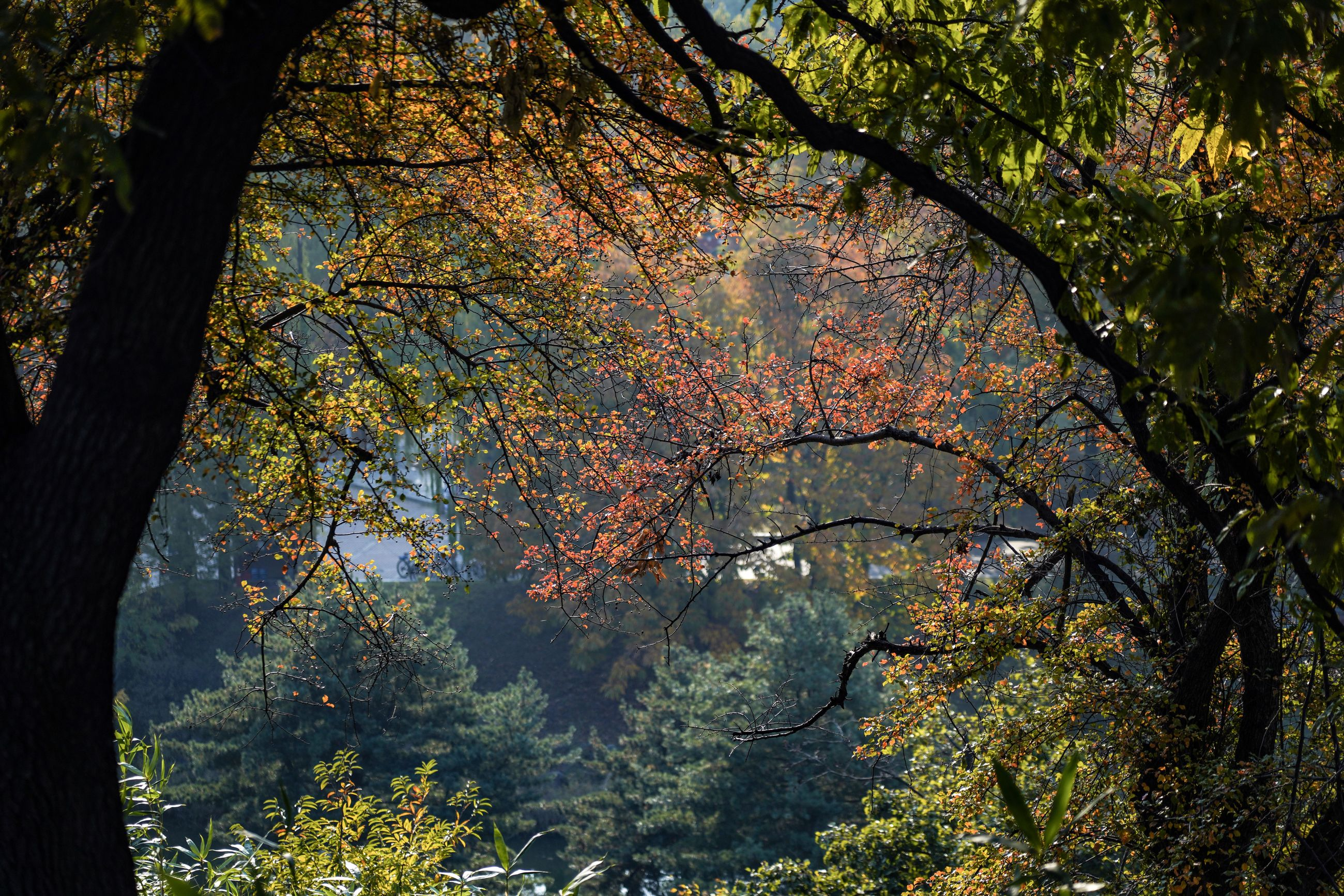 tree, plant, beauty in nature, growth, autumn, tree trunk, trunk, nature, forest, branch, tranquility, change, day, land, no people, outdoors, plant part, leaf, scenics - nature, tranquil scene, fall, natural condition, tree canopy