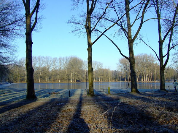 Tree Nature Sky Day Tranquility Beauty In Nature Outdoor Helmond