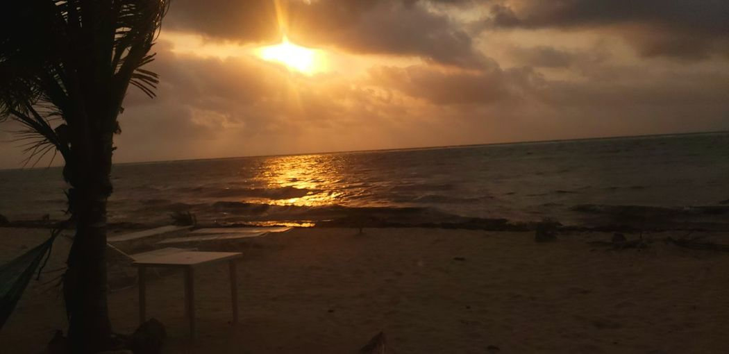 The Traveler - 2019 EyeEm Awards Water Tree Wave Sea Sunset Beach Horizon Backgrounds Sand Summer