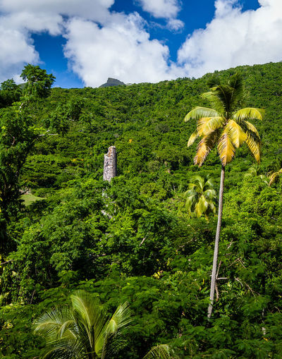 Brimstone Hill Fortress National Park, St Kitts and Nevis Sugarcane Mill Architecture Beauty In Nature Built Structure Cloud - Sky Day Field Foliage Green Color Growth Land Lush Foliage Nature No People Outdoors Plant Scenics - Nature Sky Tranquil Scene Tranquility Tree