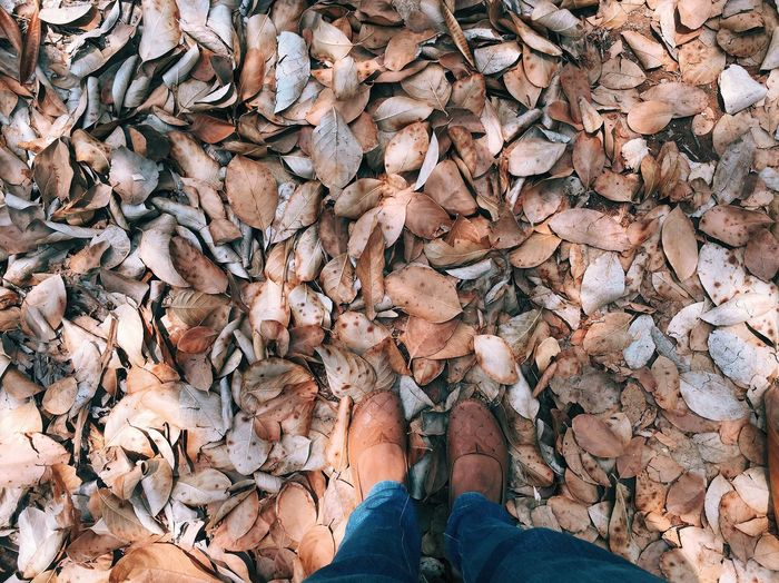 Renewal Spring Dry Leaves From My Point Of View From Where I Stand Feet