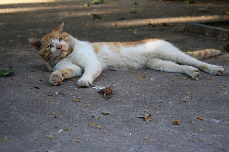 Cat Relaxing On Street