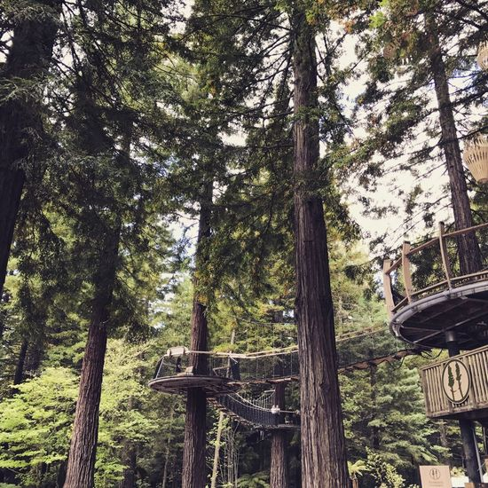 Treetop Treetopwalk Beauty In Nature Outdoors Walkway
