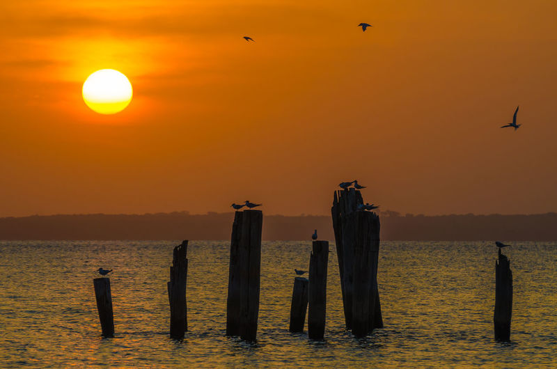 Silhouette Of Birds Flying And Perching Over Sea Against Sky During Sunset, Bubaque, Guinea-Bissau