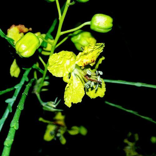 Flower Fleurs Nuit Jaune🌻 ورد Nature Nature Photography Photography Marrakech