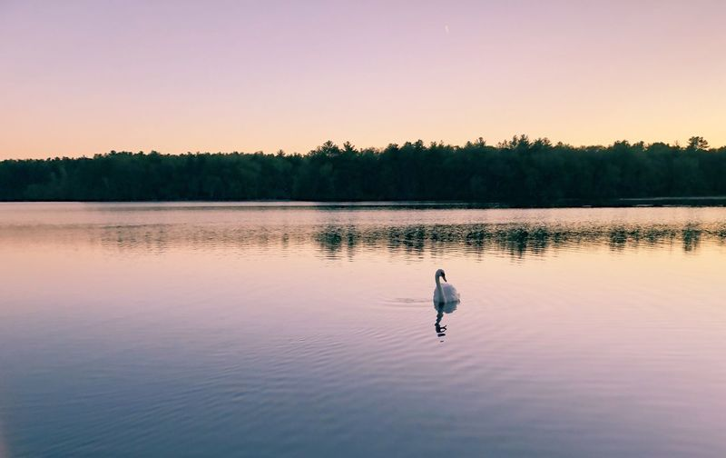 Last Summer Sunset 2017 Lake Water Nature Sunset Reflection Beauty In Nature Tree Scenics Tranquility Tranquil Scene Animals In The Wild Bird Outdoors Clear Sky Animal Themes One Animal No People Swimming Sky Day