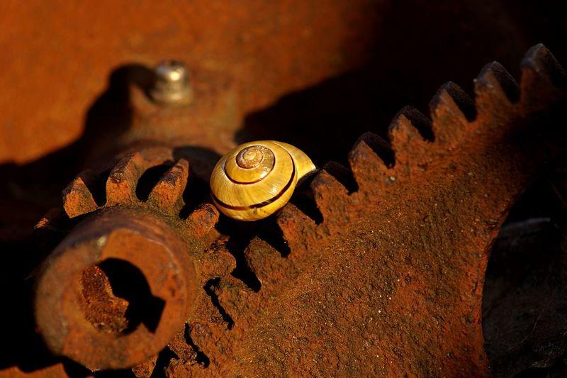 snail on rusty machine Machine Metal Rusty Shell Shells Snail Snails Snailshell Snails🐌 Snail🐌 Stillife StillLife Urban
