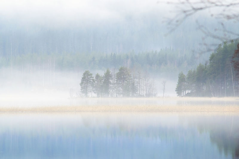 Beauty In Nature Day Fog Forest Freshness Lake Landscape Nature No People Outdoors Reflection Scenics Sky Tranquil Scene Tranquility Tree Water Winter