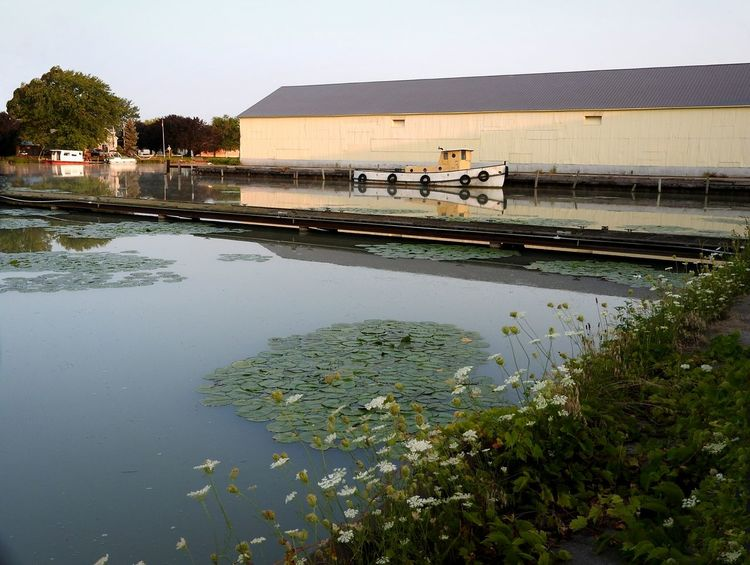 A New Dawn ~ Water Outdoors Water Plant Beauty In Nature The Week On Eyem Tranquility Lotus Water Lily Floating On Water Green Color Harbour View Small Town Life Ontario, Canada Tugboat Industrial Building  Reflections Water Lily Riverview Dockside Docked Boat