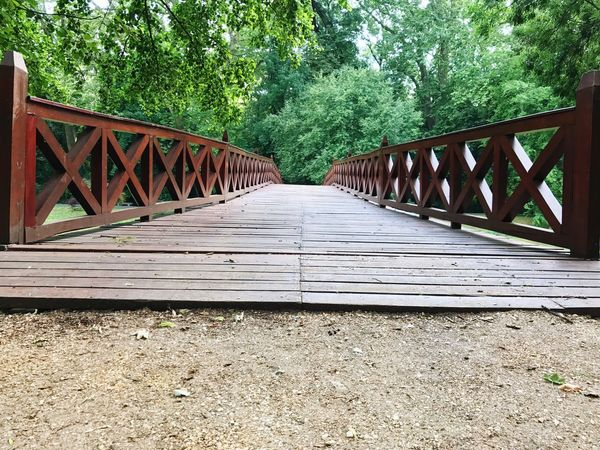 Tree Wood - Material Bridge - Man Made Structure Day Outdoors Nature No People Forest Built Structure Footbridge Architecture Beauty In Nature